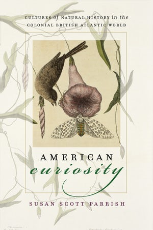 American Curiosity